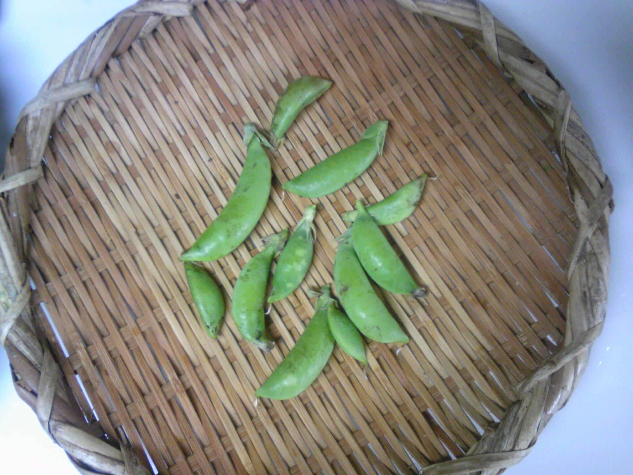 つるなしスナップエンドウ収穫